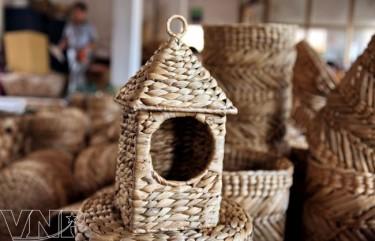 phát triển nghề đan cói