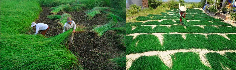 banner-seagrass